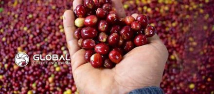 Indonesia Imports The Best-Selling Coffee From 5 Countries
