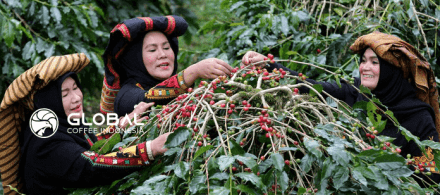 36. Excellence in the processing of Lintong Arabica Coffee from Sumatra